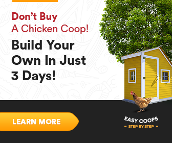 build a chicken coop cheap