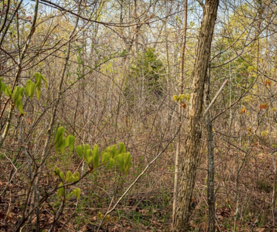 land for sale laclede county mo